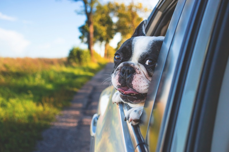 Use tips for driving with pets to make sure that you don't run into any safety issues when you need to take your best friend with you.