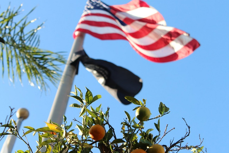 Driving School in Orange Close Up of Orange Tree in Front of the American Flag