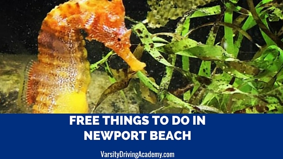 6 Free Things to Do in Newport Beach