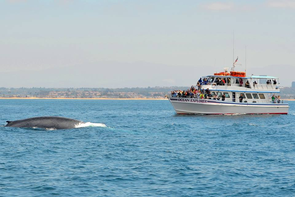 Things to Do in Orange County Whale Watching